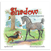 MHF Shadow: The Curious Morgan Horse